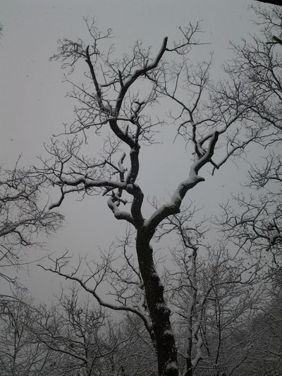 perfect coating Streamzoofamily Tadaa Community Taking Photos Nature Eye4photography  EyeEm Nature Lover EyeEm Best Shots 100percentmine Winter Natures B&w Icicles Noedit Spring Into Spring Enjoying Life Monochrome Check This Out Best Time Of The Year Hugging A Tree TreePorn