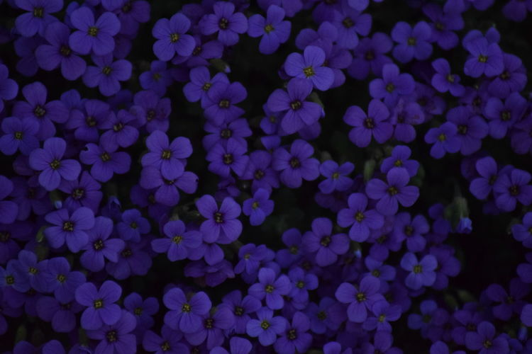 24.04.2018 April April2018 Beauty In Nature Blue Full Frame Nature No People Outdoors Purple