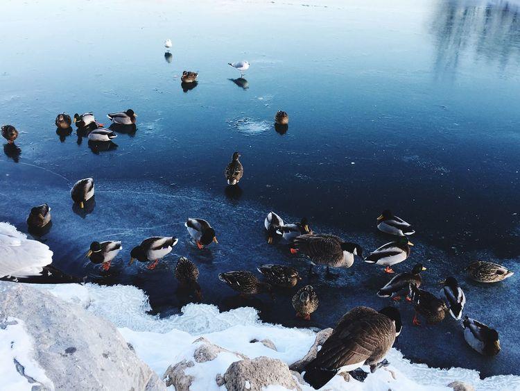 EyeEm Selects Swans, Ducks Lake Ontario , shoreline