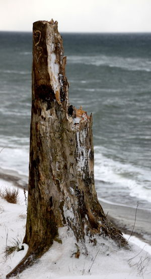 Beauty In Nature Close-up Day Dead Tree Horizon Over Water Nature No People Outdoors Scenics Sea Sky Tranquility Tree Tree Trunk Water Winter