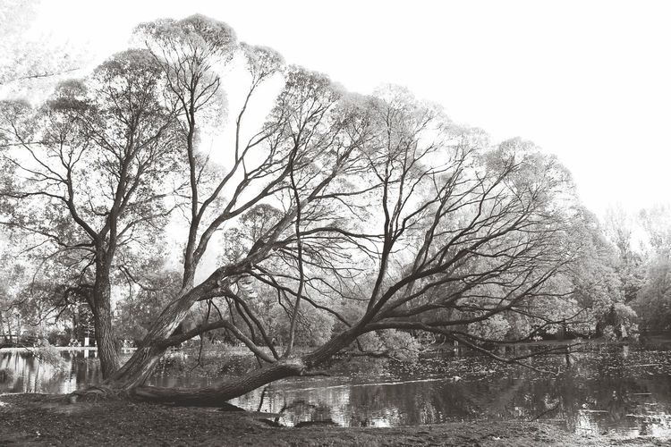 Tree Monochrome