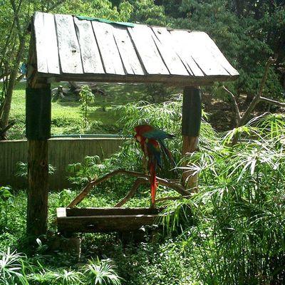 Guacamayas Caricuaozoo zoológico Caricuao caracas ccs