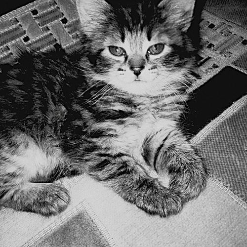 Domestic Cat First Eyeem Photo