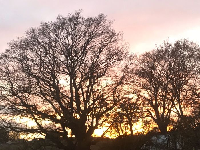 Tree Nature Beauty In Nature Bare Tree Branch Low Angle View Sunset Outdoors Tranquil Scene Tranquility Sky Silhouette Scenics No People Sunlight Growth Day