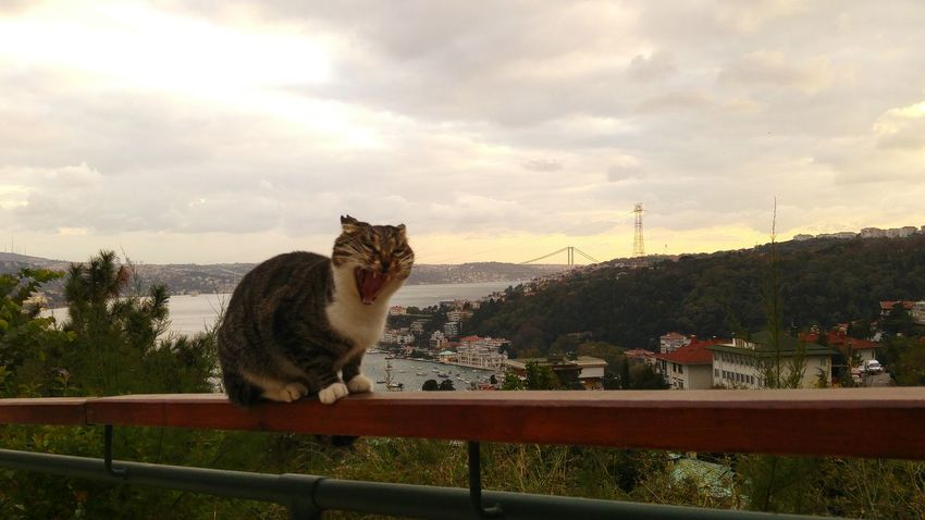 Istanbul Turkiye Bogaziciuniversitesi Cute Cat Great Atmosphere Great View