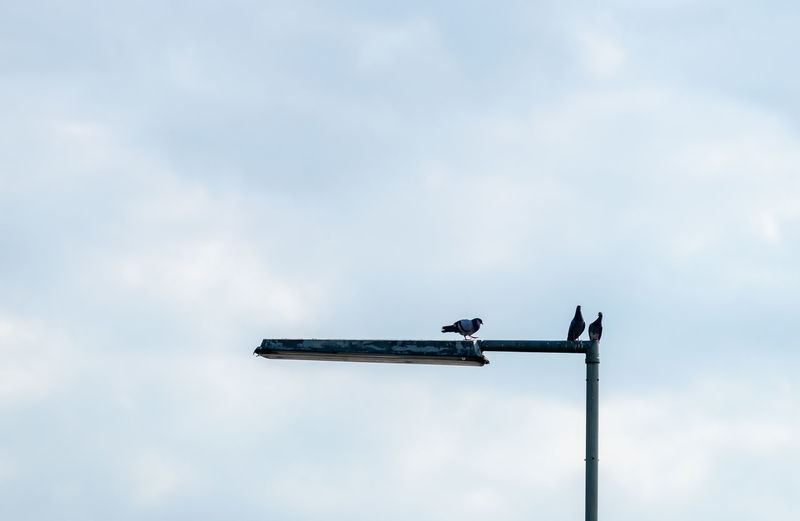 Low angle view of bird perching on street light against sky