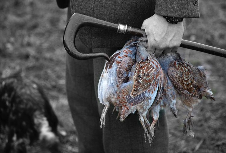 Man holding dead birds in hand