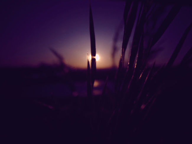 good night :) Beauty In Nature Close-up Dusk Field Illuminated Lens Filter Magenta Magenta Filter Nature No Edits Outdoors Selective Focus Silhouette Sun Sunset Tranquil Scene