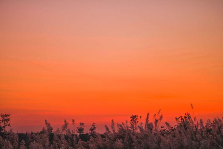 Plants on field against orange sky