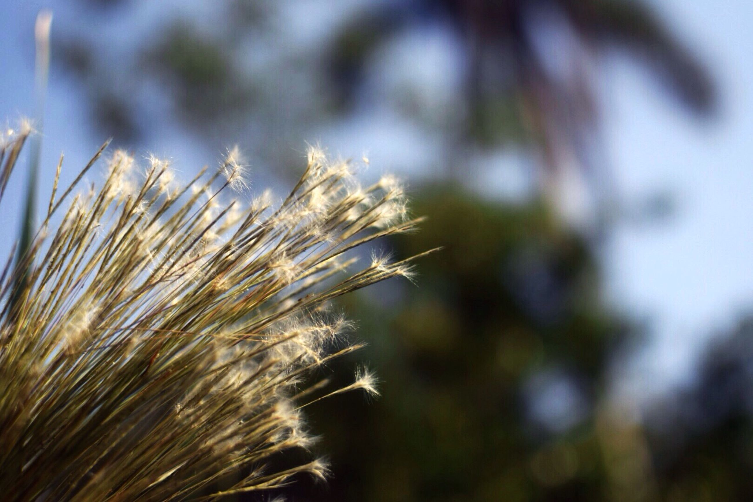 growth, close-up, focus on foreground, plant, nature, fragility, freshness, selective focus, beauty in nature, field, stem, dandelion, uncultivated, flower, day, growing, tranquility, no people, outdoors, dry