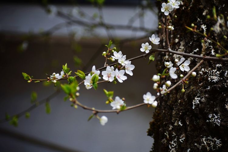 sping is here Tree Flower Flower Head Branch Springtime Blossom White Color Apple Blossom Beauty Close-up Fruit Tree In Bloom Plum Blossom Pollen Twig Plant Life