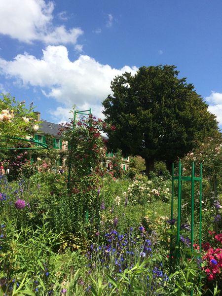 Enjoying The Sun Picking Flowers  Planting Gardening