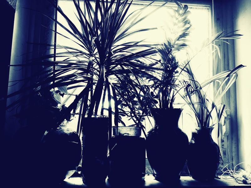 Plant Growth Day Potted Plant Shadow Silhouette Window Sunlight
