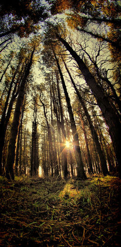 Lost forest Autumn Trees Beauty In Nature Forest Nature Outdoors Tree Tree Trunk