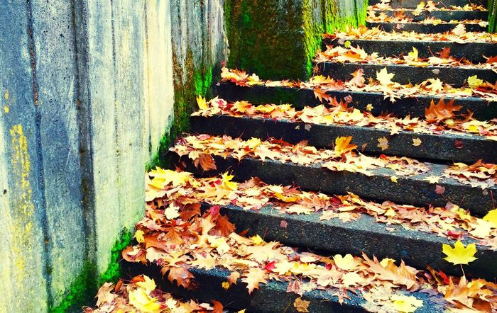 City Streetphotography Urban Landscape Fall Beauty Colors Hanging Out Downtown Steps From My Point Of View