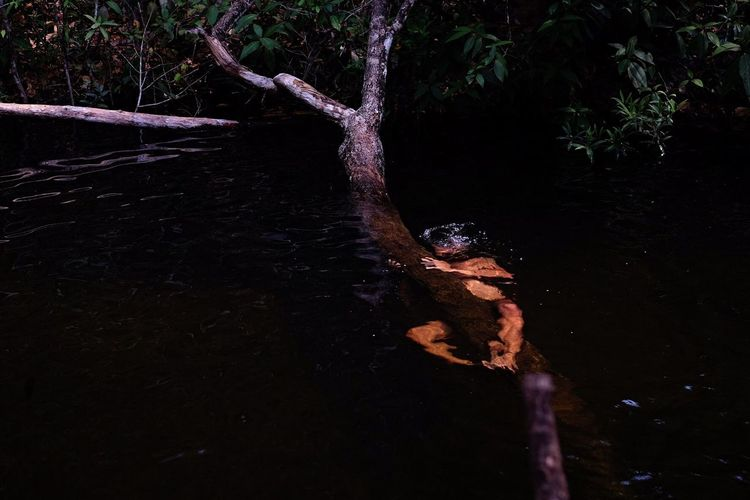 Lizard on tree at night