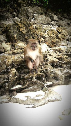 Monkey Monkeybeach Beachlife Thailand Phiphiisland Phiphidon Nature Animals