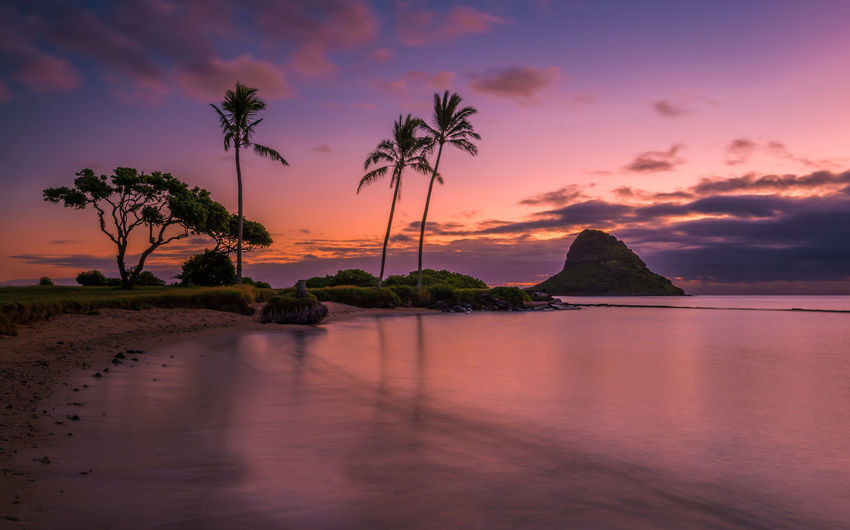 Hawaii Waikiki Oahu Island Oahu, Hawaii Water Sky Palm Tree Tree Plant Beauty In Nature Tropical Climate Sunset Scenics - Nature Sea Tranquil Scene Tranquility Cloud - Sky No People Nature Land Reflection Beach Idyllic Coconut Palm Tree
