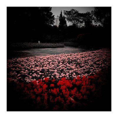 City 南园滨江绿地 Autumn Leaves Red Color Autumn Red Flower Vignette Road Autumn Colors 上海.中国 City Street 秋色 CityLifeStyle 秋天 Vignette Art Shanghai, China Sky Bridge View