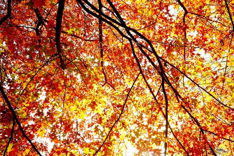 Fall Beauty , autumn, herbst, leaves