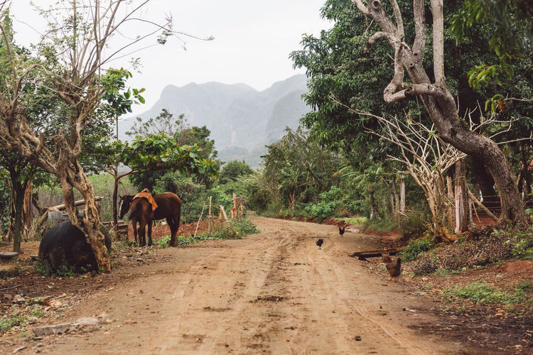View of elephant walking on dirt road