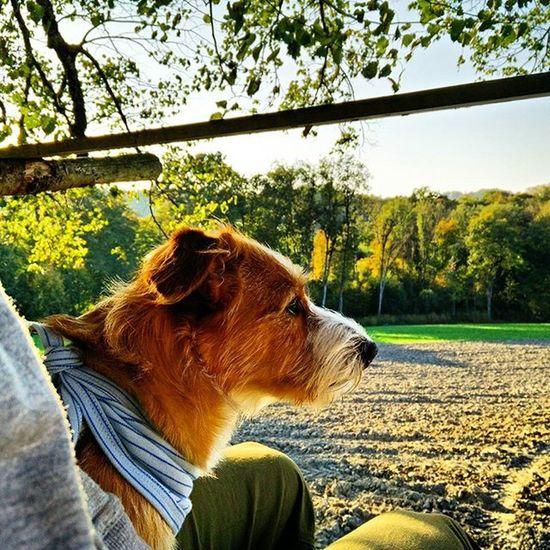 Herbst Warmlight Autumn Autumnsun Dog Hund