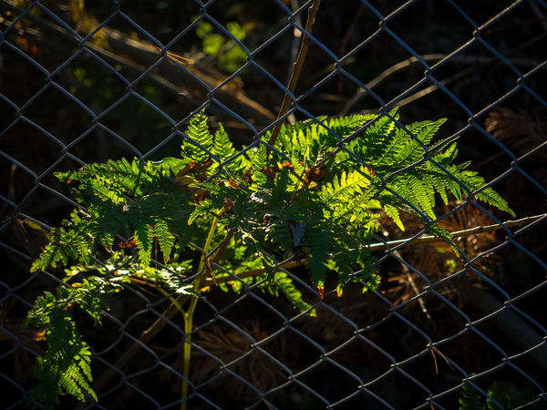 Plant behind fence in the afternoon sun Afternoon Sunlight Behind Bars Captured Plant Fence Sun Beam Sun Beam In Nature Sun I Leaves Behind Fence Sun Plant