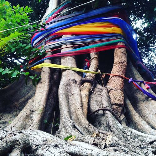 We need a big tree ! 🍃🌲 Taking Photos EyeEm Best Shots Enjoying Life Thailand Road Trip From My Point Of View EyeEm Gallery Taking Photos EyeEm Nature Lover Beautiful Holiday Tree Colors