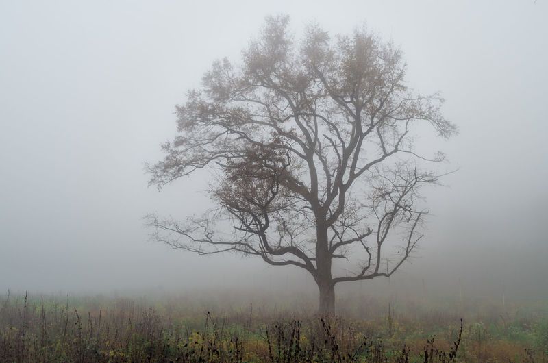 Fog Tree Plant Beauty In Nature Land Tranquility Field Environment Non-urban Scene Sky Bare Tree Tranquil Scene Landscape Nature Scenics - Nature Remote No People Growth Day Outdoors Isolated Hazy