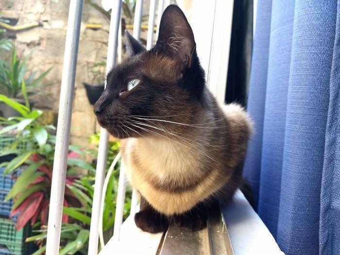 📷 my princes! Cats Of EyeEm #Cats, #Catlove #catstar #cat #catnap #catoftheday #catpic #catlovers #catsconnect #catinstagram #catsofinstagram #gato #gatinhos #gatto #garfield #petstagram #premierpet #photooftheday #petsofinstagram #picoftheday #petlovers #instabicho #ilovecats #ilovemypet #issovici #Cats, #Catlove #CatEyes #petsinthefarm Petstagram Pets Of Eyeem Petslife Petsofeyeem Petsandanimals Cat