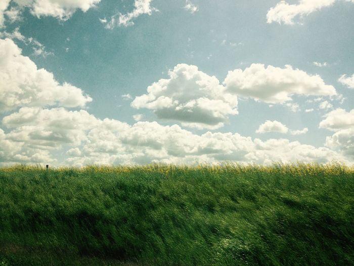 Catcher in the Klee Rapsfeldshooting Field Rapsblüte The Week Of Eyeem Beauty In Nature EyeEm Nature Lover Tranquil Scene No People Outdoors The Essence Of Summer- 2016 EyeEm Awards The Essence Of Summer EyeEm Best Shots Eye4photography  EyeEm Best Shots - Nature Nature Photography Tranquility Idyllic Wind Wave 35mm EyeEm Gallery Feel The Journey