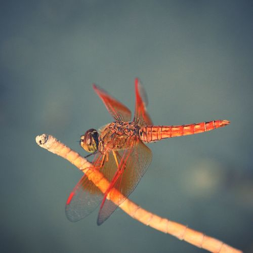 Dragonfly Close-up Focus On Foreground Extreme Close-up Nature Beauty In Nature First Eyeem Photo EyeEm Nature Lover Pakistan