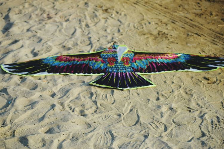 Multi Colored Beach Flying Sand Dune Sand Close-up Exploring Fun