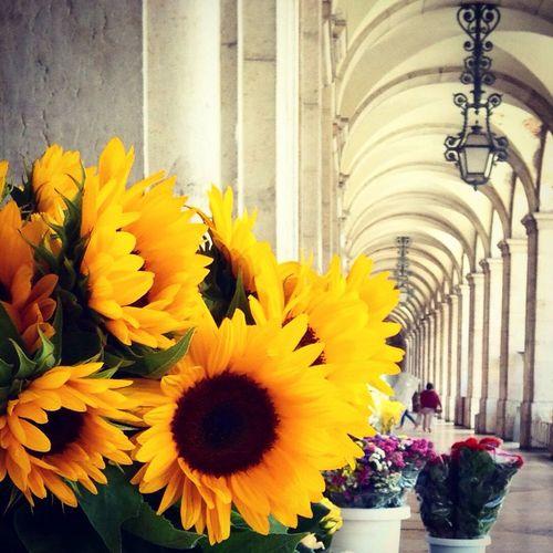 Flowers Walking