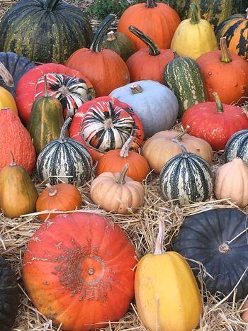 Pumpkin heaven Pumpkin Food And Drink Food Vegetable Healthy Eating Variation Choice First Eyeem Photo Agriculture Abundance Autumn EyeEmNewHere