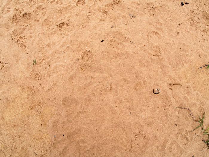 Ground Text Dog