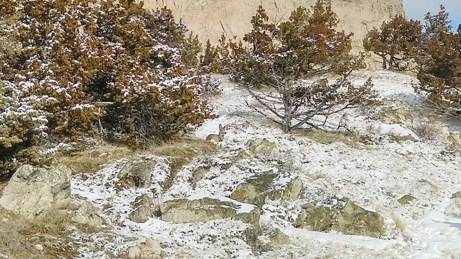 Day Full Frame No People Backgrounds Outdoors Sunlight Nature Cold Temperature Camo Camouflage Landscape Deer Bedded Down Deer In The Snow Badlands Badlands National Park Hillside Alone at Badlands National Park, South Dakota Neighborhood Map