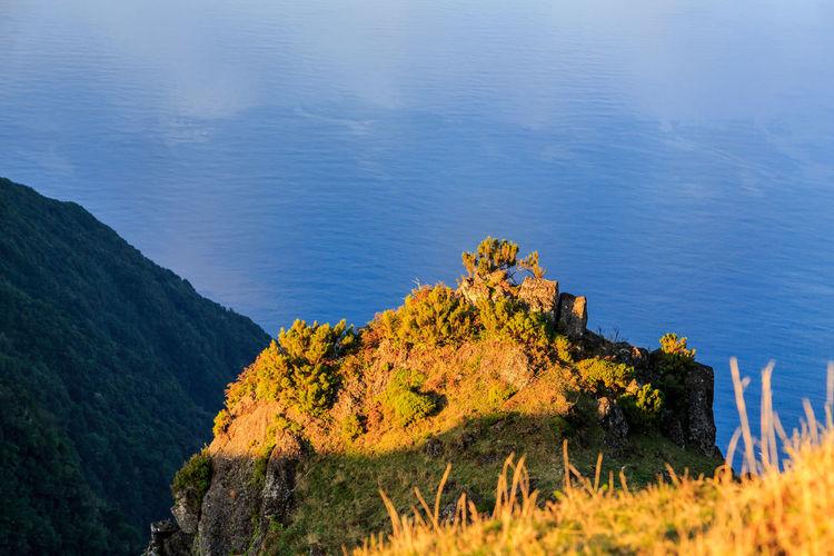 High Angle View Of Trees And Rocks On Sea