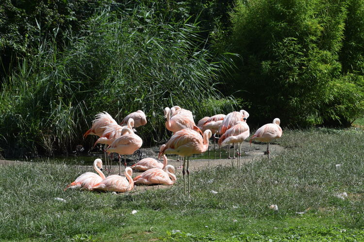 Flamingos on grassy field by plants