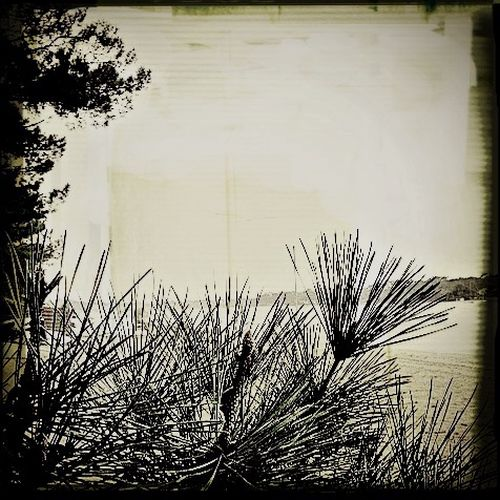 EyeEm Best Shots - Black + White Autumn Collection Nature Landes Lac Lake View