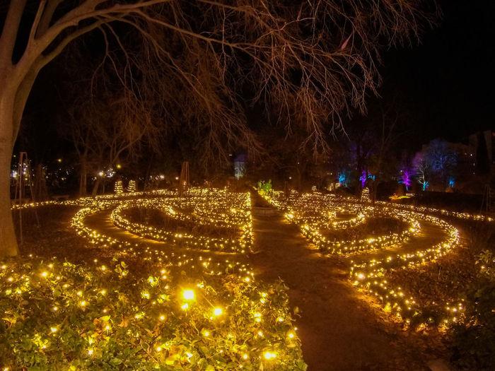 Illuminated light trails on street at night
