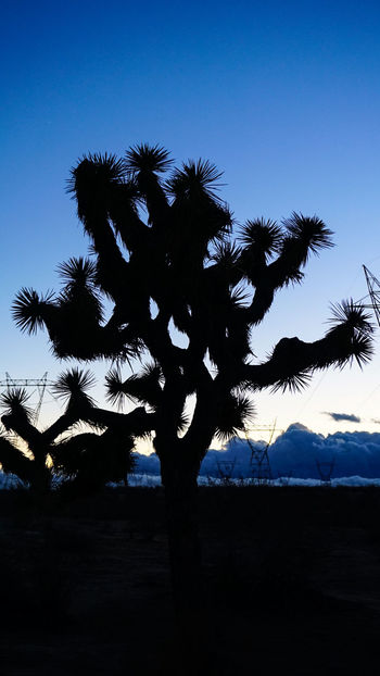 Silhouette Tree Sky Outdoors Sunset Nature Beauty In Nature Photographer Photography Clouds And Sky EyeEm Best Shots Godscreation Desert Sky Storm Watch Cloud_collection  Perspective Check This Out Sony A6000 Sonyalpha Sonycameras Screensaver Vendor