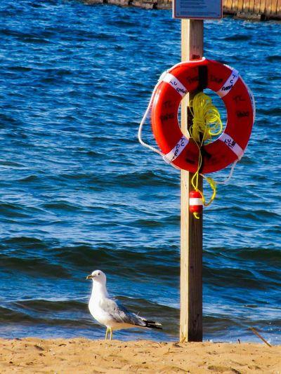 Lifeguard on duty😂😂 Animal Themes Bird Seagull Beach Beach Sand Lake Water No People Safety Lifeguard Station Life Vest Nature Beauty In Nature Michigan Pure Michigan Traverse City