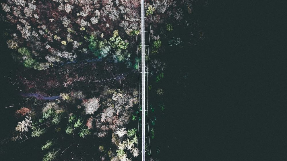 Bridge sky View Plant Tree Nature Day Built Structure Architecture Outdoors No People Backgrounds Green Color