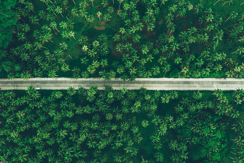 Aerial view of road amidst tropical trees on land