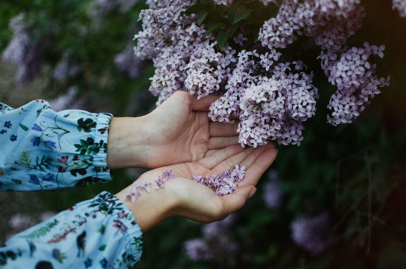 Cupped Hands Below Purple Flowers
