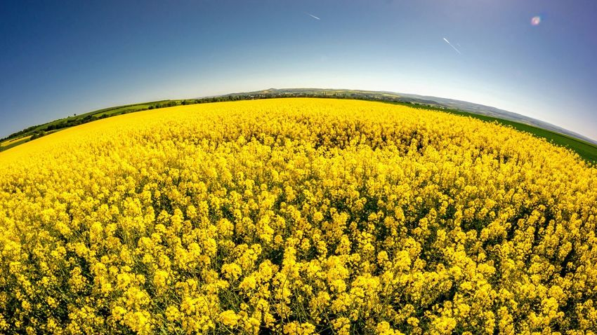 Beauty In Nature Plant Scenics - Nature Sky Yellow Growth Environment Field Nature Agriculture Oilseed Rape