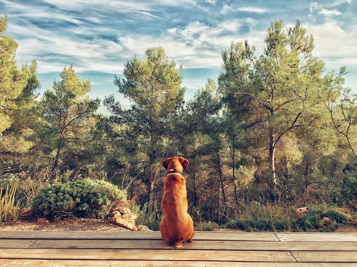Dog staring into the forest. Dog Forest Woods Tree Plant Cloud - Sky Sky Nature Day No People Sunlight Outdoors Animal Animal Themes Sunny Green Color Tranquility A New Beginning EyeEmNewHere EyeEmNewHere