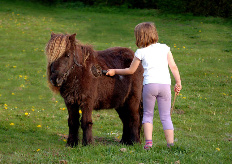 My daughter's first pony Pony Mammal Animal Themes Domestic Animals Domestic Livestock Animal Grass Pets Field Child Horse Green Color Brown Nature