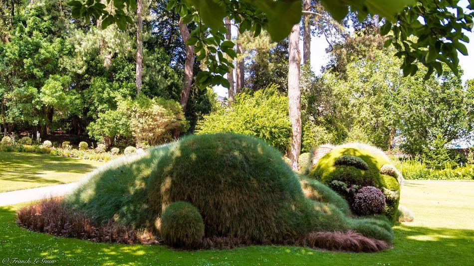 Chuuutt le chat dors 😁 Au jardin des Plantes à Nantes Nikon Nikonphotography Tamron Nikon D7100 Nikon Top France Landscape Amazing